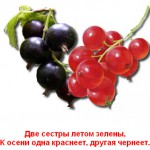 2012-02-24_200712