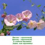 2012-02-25_122242