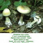 2012-02-26_173534