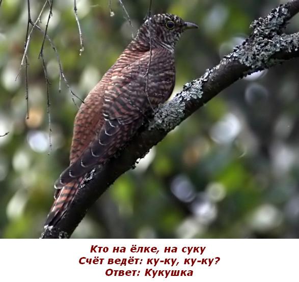 Загадки для детей с ответами про птиц