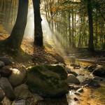 Детские загадки с картинками (про деревья и траву)