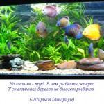 aqarium