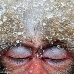 лучшие фотографии животных