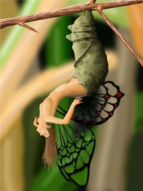 рождение бабочки