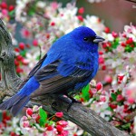 Загадки для детей с ответами (про птиц)
