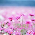 Развивающие детские загадки про цветы (в картинках)