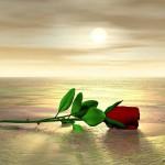 Мелодия любви. Милым женщинам в день 8 марта…