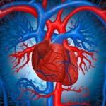 В очередной раз об инфаркте и продолжительности жизни. Точка зрения специалиста
