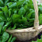10 зеленых коктейлей для здоровья. Рецепты, картинки